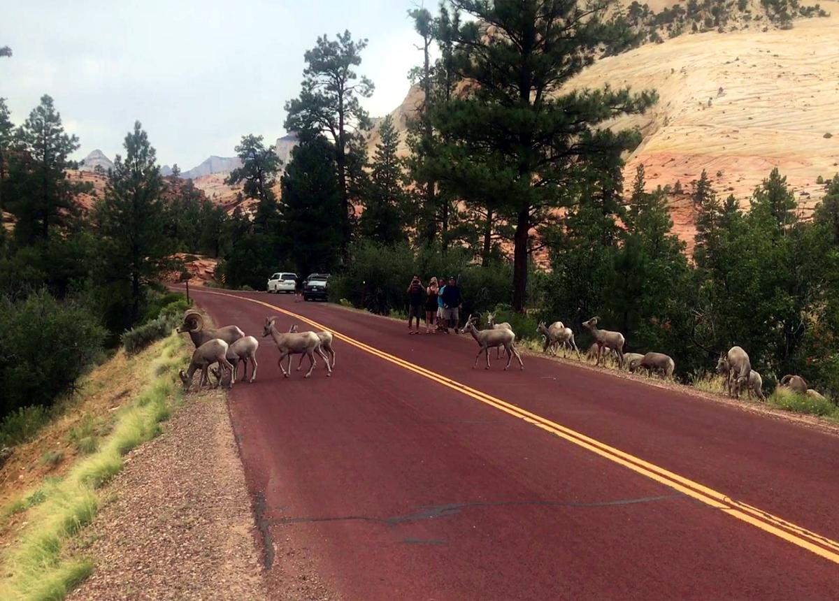 Animals in  Zion