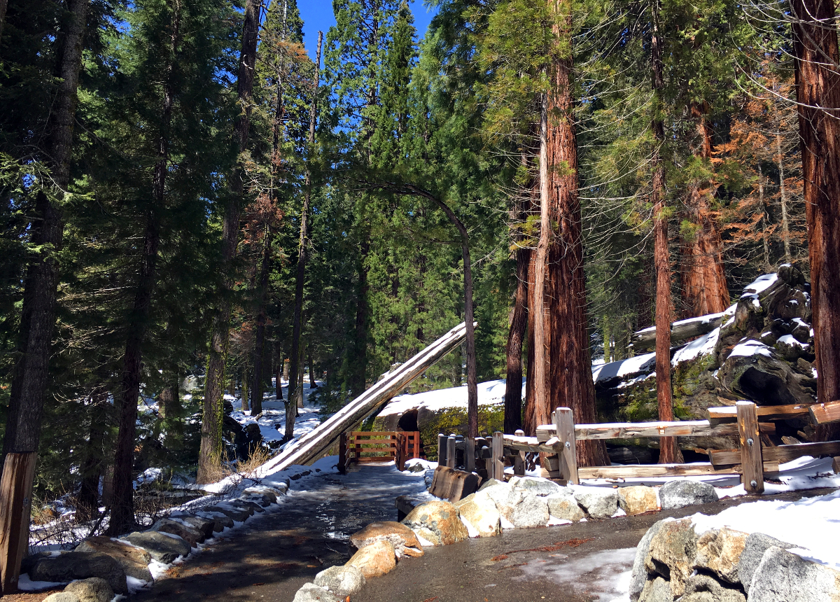 Trials in Sequoia National Park