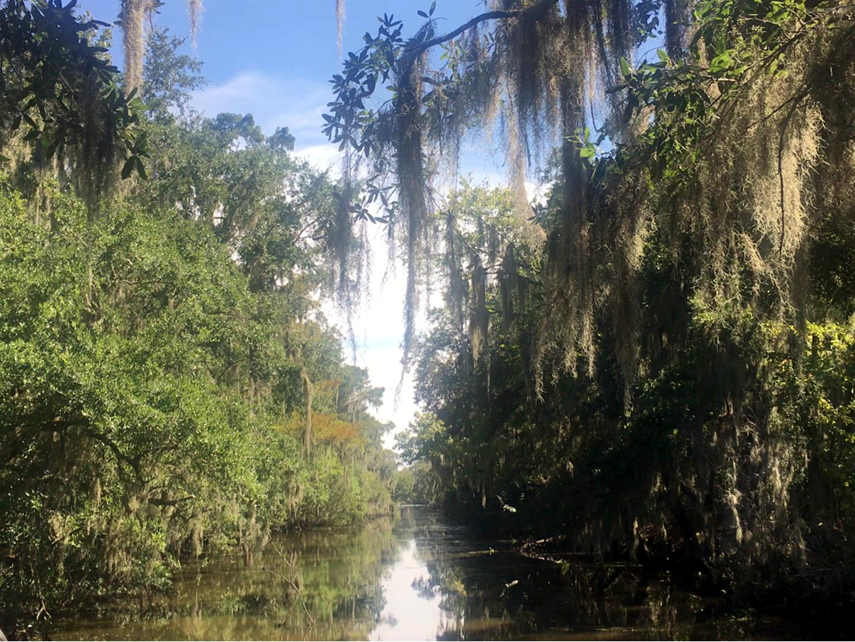 Louisiana Airboat Tour-Swamp of Louisiana