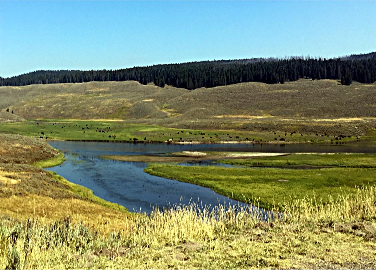 Park Narodowy Yellowstone-Hayden Valley