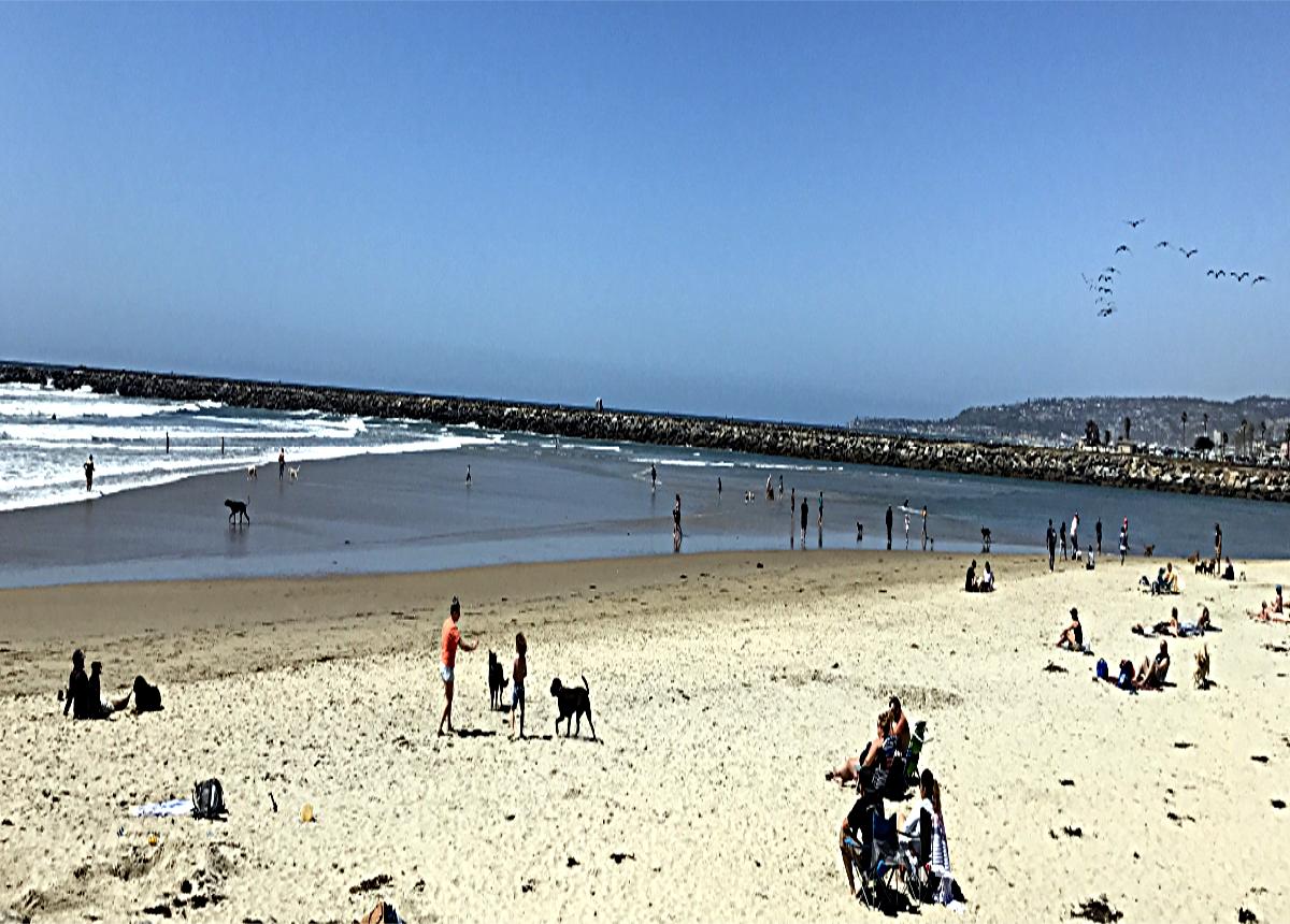 San Diego Pet friendly Beach
