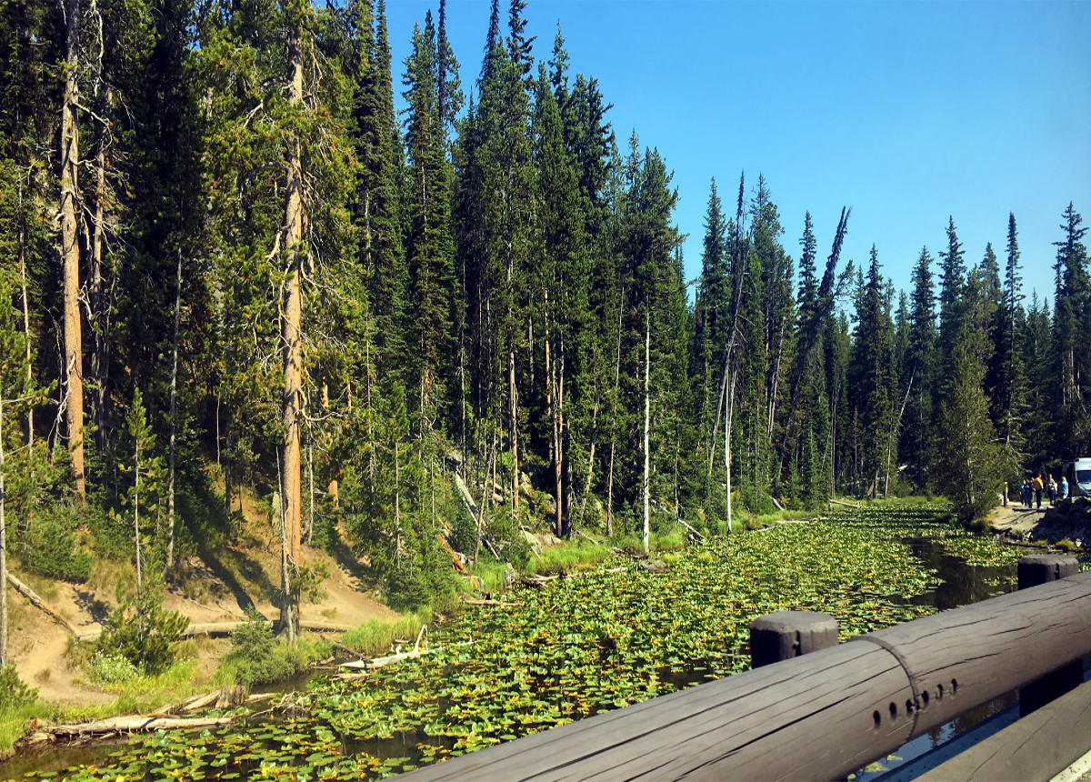 Park Narodowy Yellowstone-Isa Lake