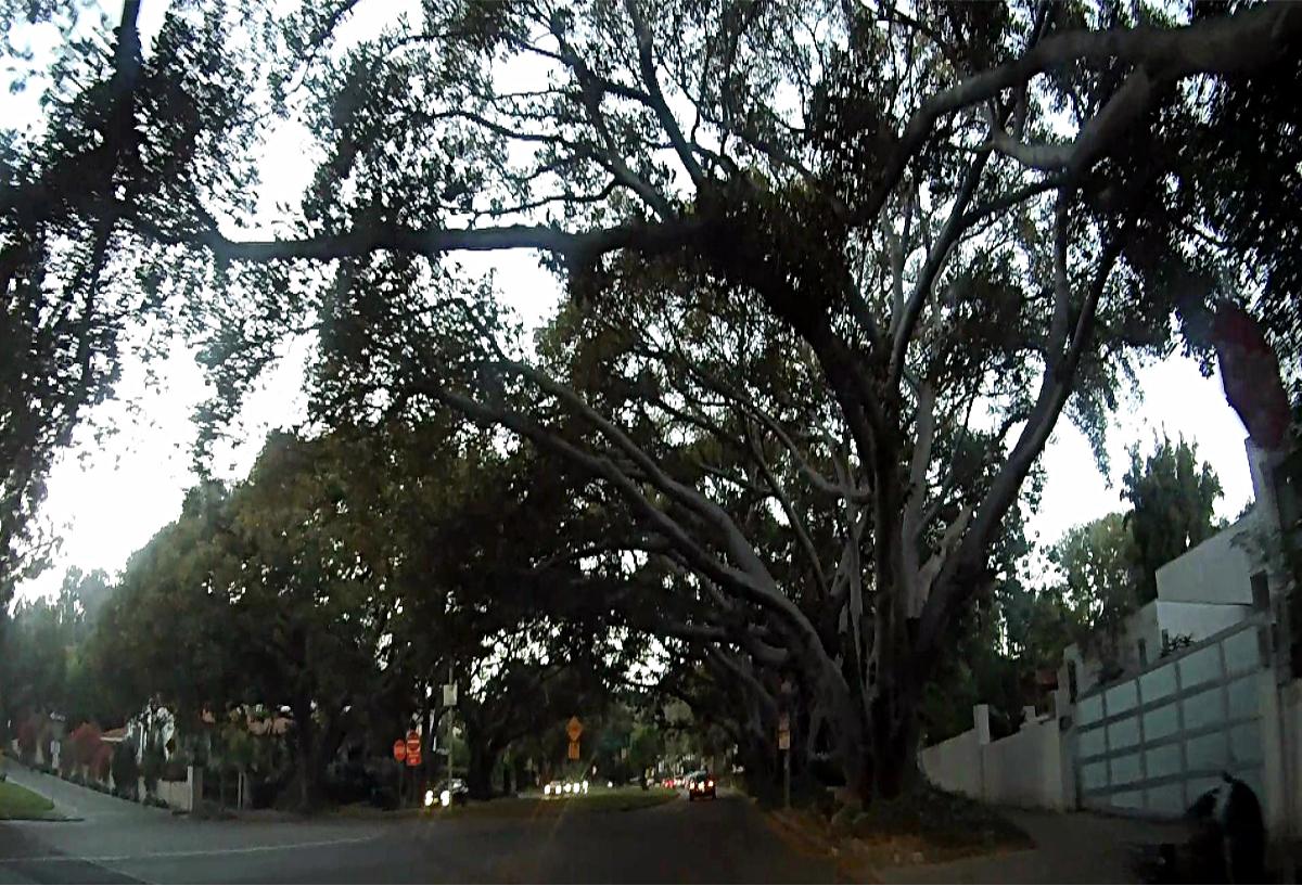 droga do Griffith park