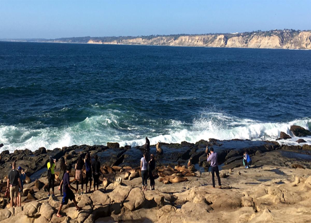 Seals in San Diego