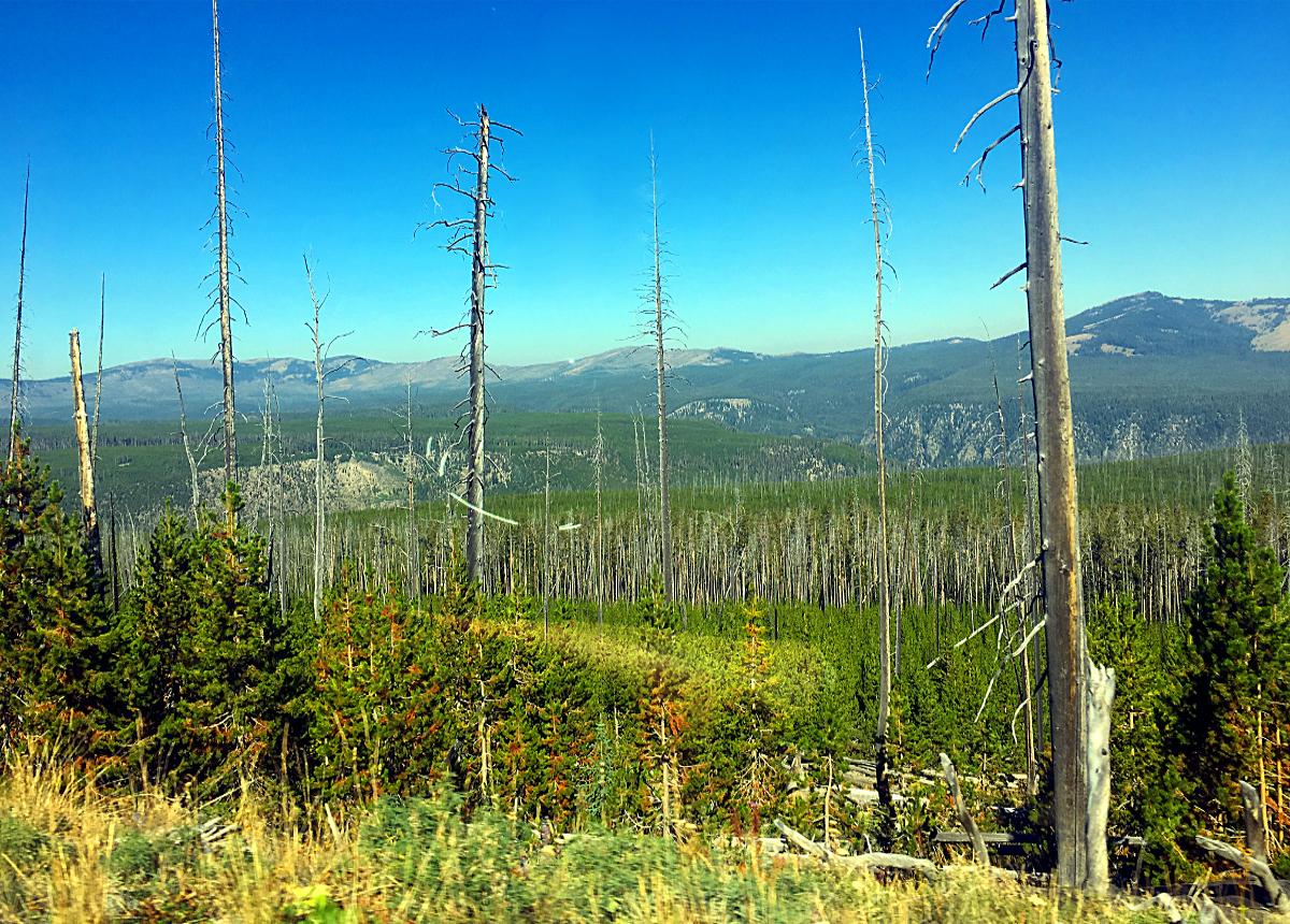 Park Narodowy Yellowstone-LAS