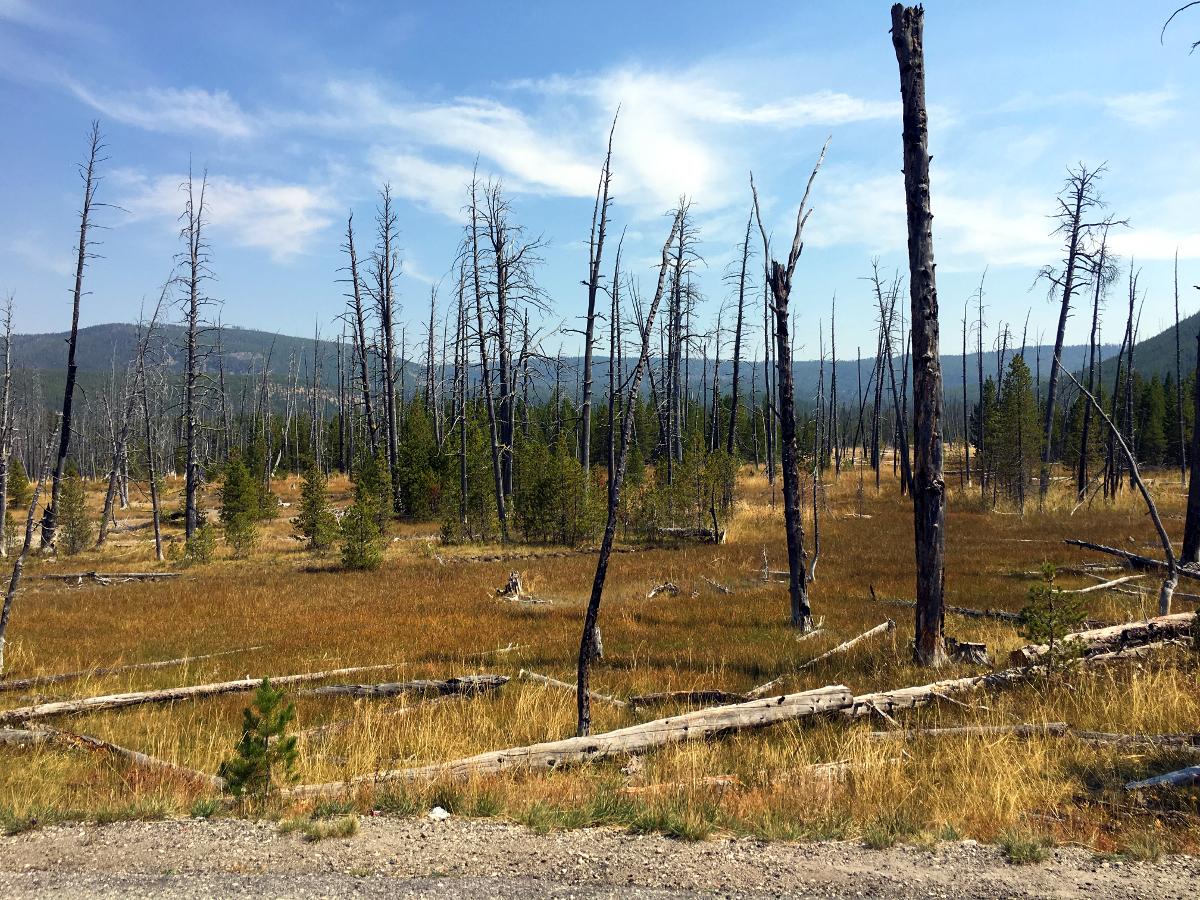 Park Narodowy Yellowstone-Spalony LAS