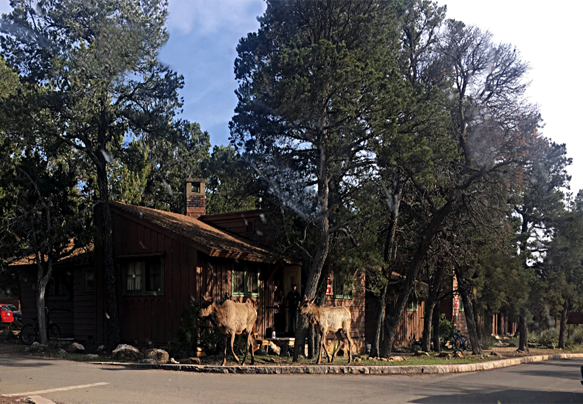 Motels Usa-Cottage for rent next to the Grand Canyon