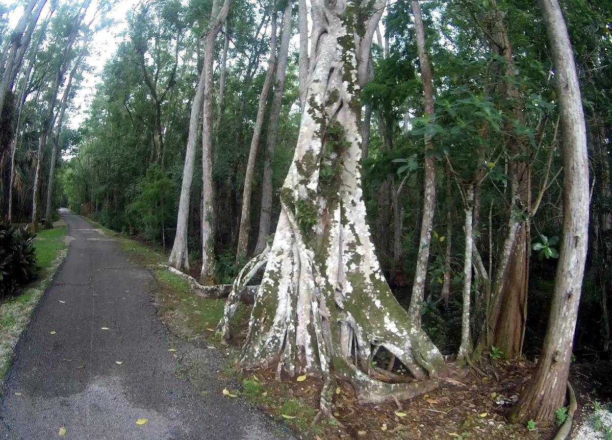 everglades swamps