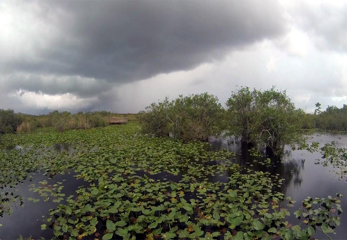 Visiting Everglades National Park-Anhinga Trial