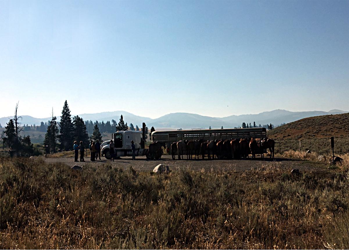 Real America-Horses, Montana